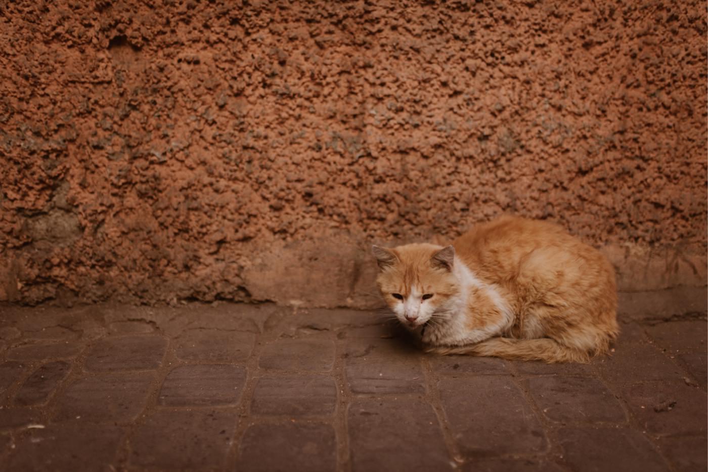 ewelina zieba marrakech sesja slubna 03