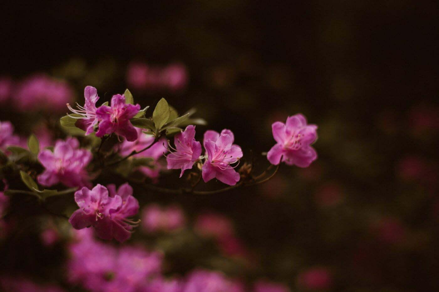 ewelina zieba sesja narzeczenska kwiaty warszawa 01