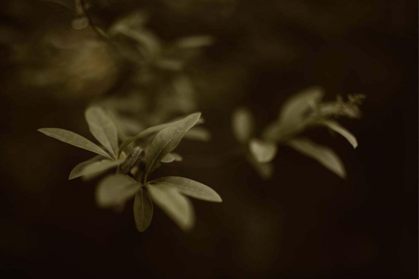 ewelina zieba sesja narzeczenska ogrod botaniczny 01