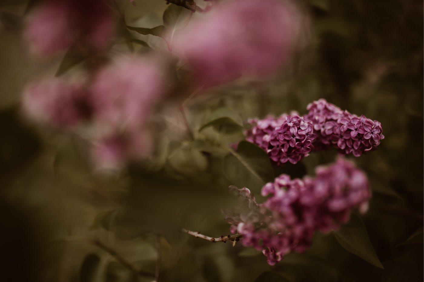 ewelina zieba sesja narzeczenska ogrod botaniczny 02