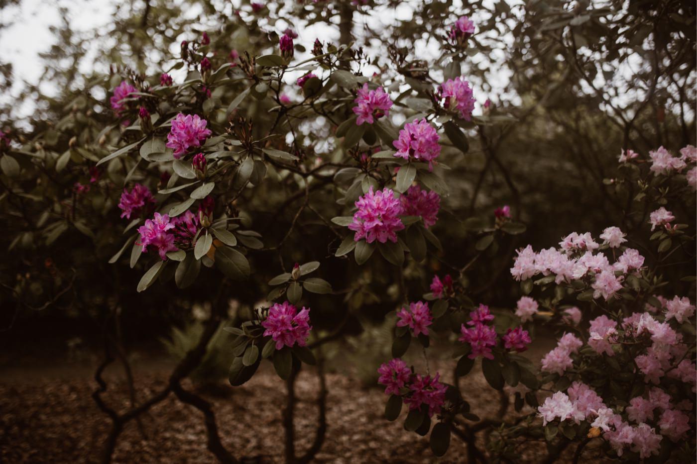 ewelina zieba sesja narzeczenska ogrod botaniczny 08