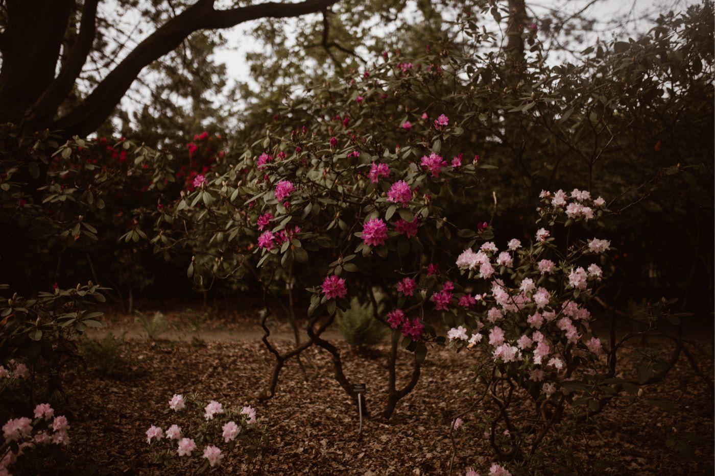 ewelina zieba sesja narzeczenska ogrod botaniczny 19