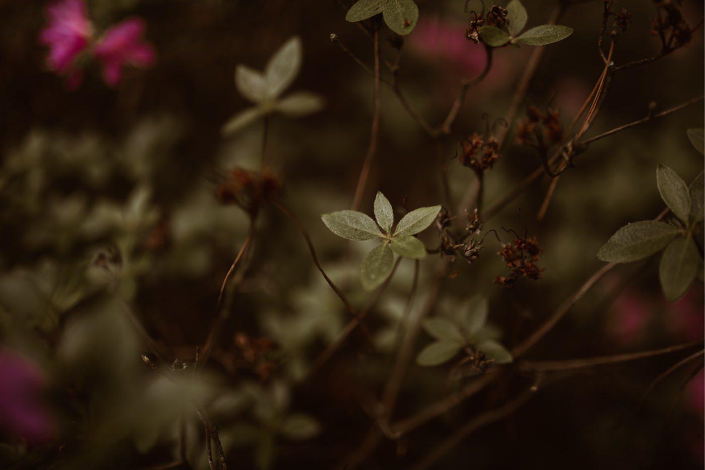 ewelina zieba sesja narzeczenska ogrod botaniczny 20