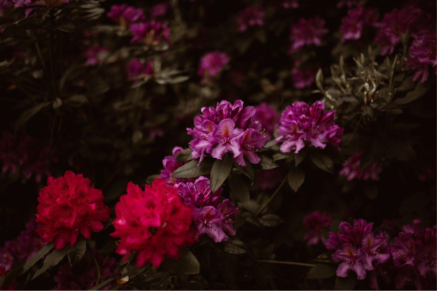 ewelina zieba sesja slubna kwiaty 01