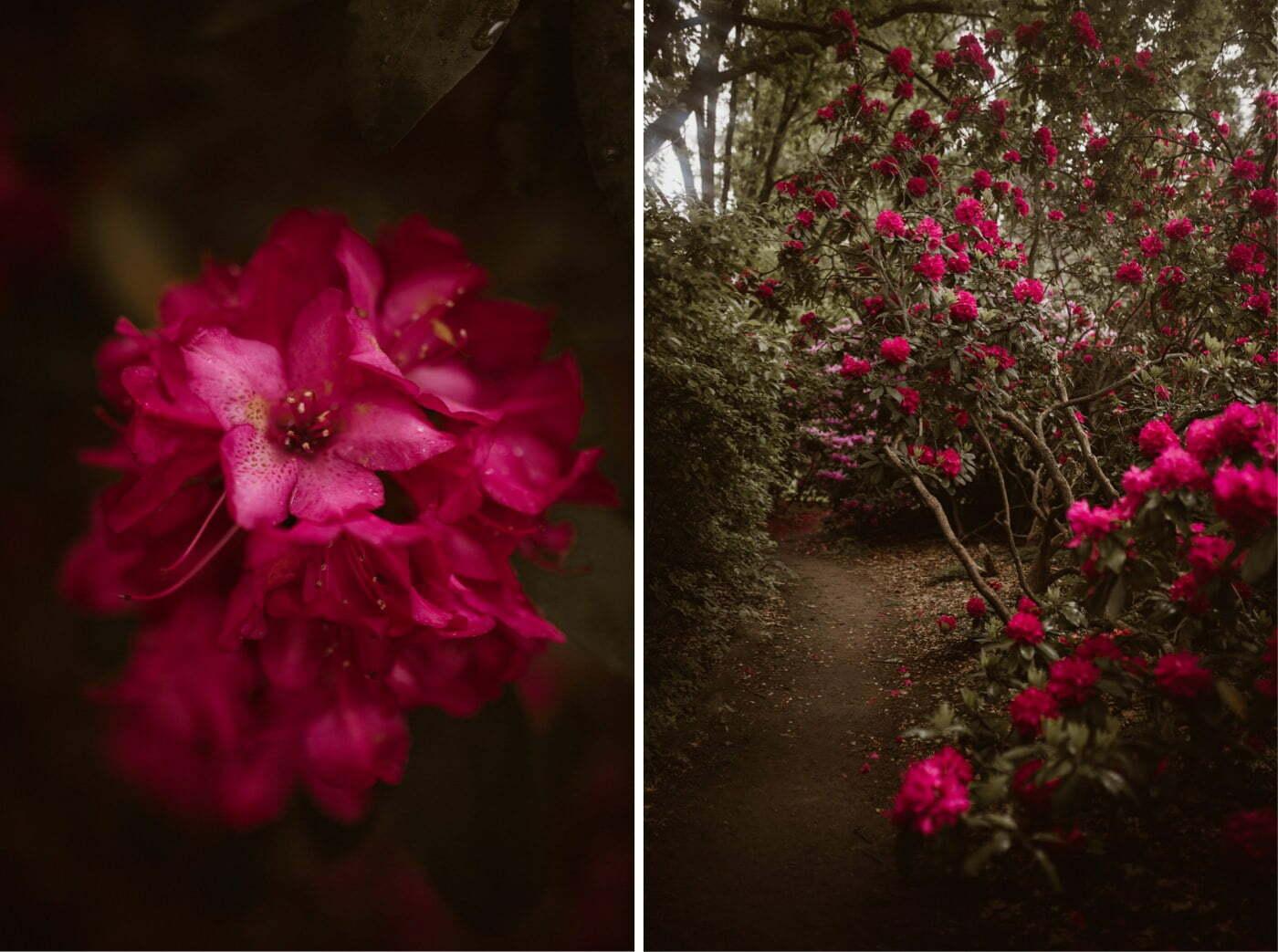 ewelina zieba sesja slubna kwiaty 02