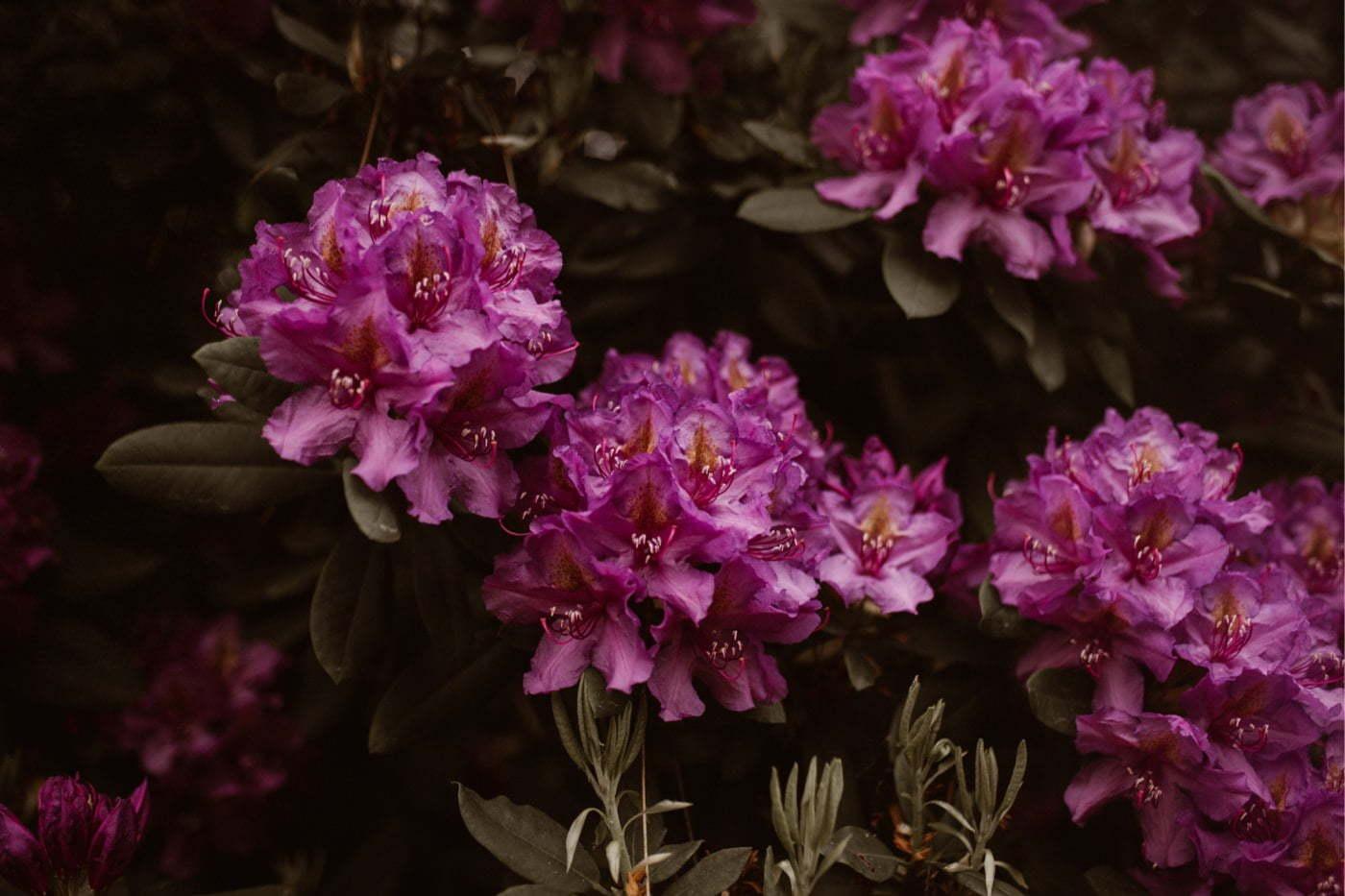 ewelina zieba sesja slubna kwiaty 17
