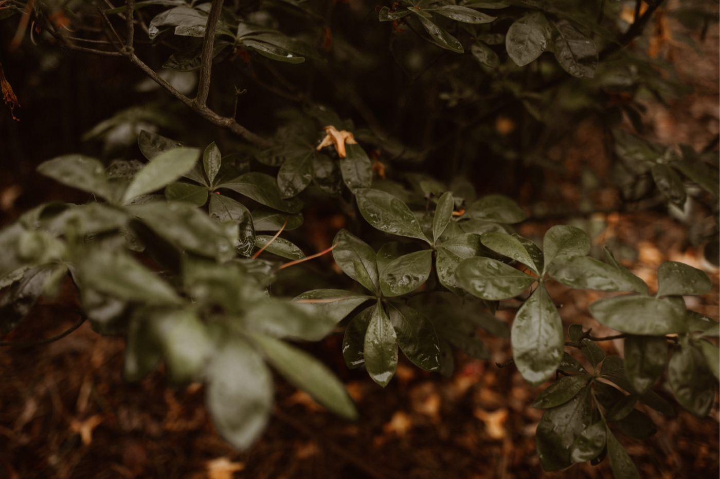 ewelina zieba sesja slubna kwiaty 20