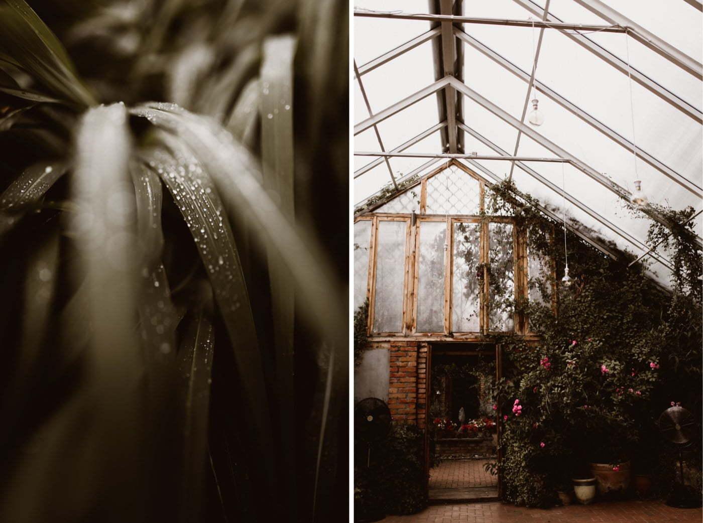 ewelina zieba rustykalne wesele stara oranzeria warszawa 002